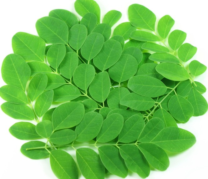 moringa_leaves